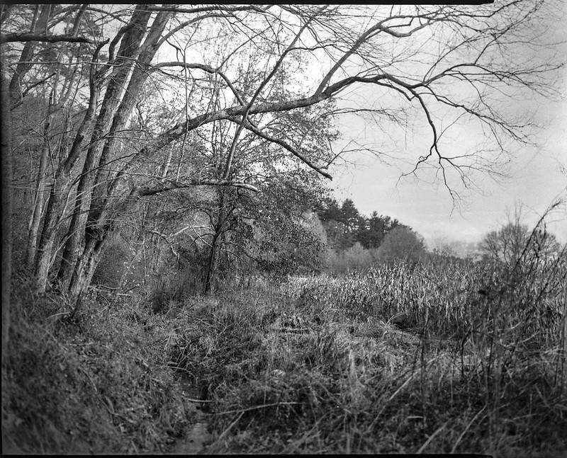 winter landscape, overhanging limbs, cornfield,  Biltmore Estate, Asheville, NC, Graflex Crown Graphic, Schneider Symmar f-5.6, 150mm, Bergger Pancro 400, HC-110 developer, 11.22.20