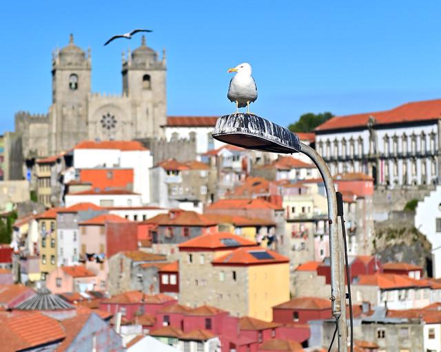 Panorámica de Oporto desde el Mirador da Vitoria
