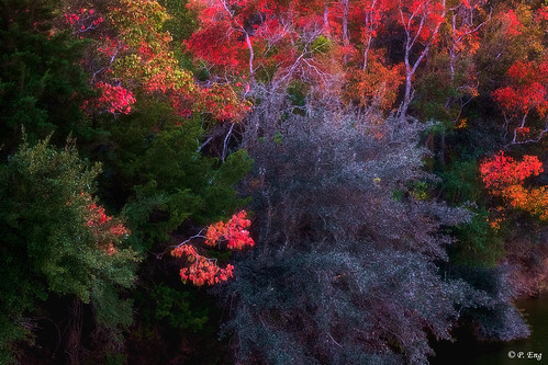 landscape composition flickr photography nature outside outdoor scenery travel travelphotography fujifilm mirrorless autumn leafs sunset buffalorunpark texas