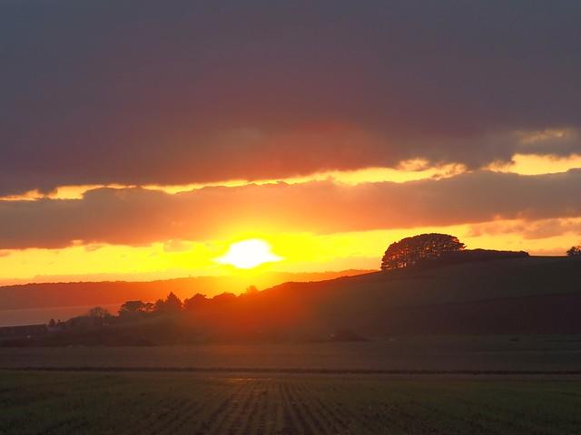 Rizières en Bretagne? Ricefields in Brittany?