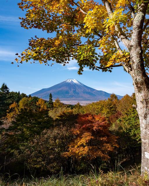 Autumn scenery in Oshino