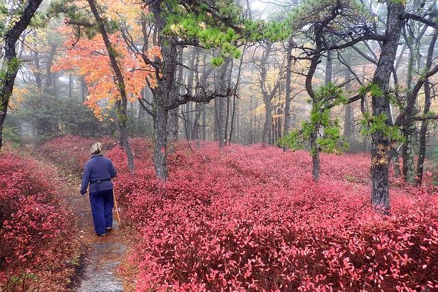 Hiker in Fall Paradise