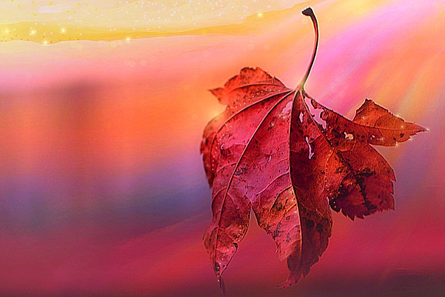 leaf glory