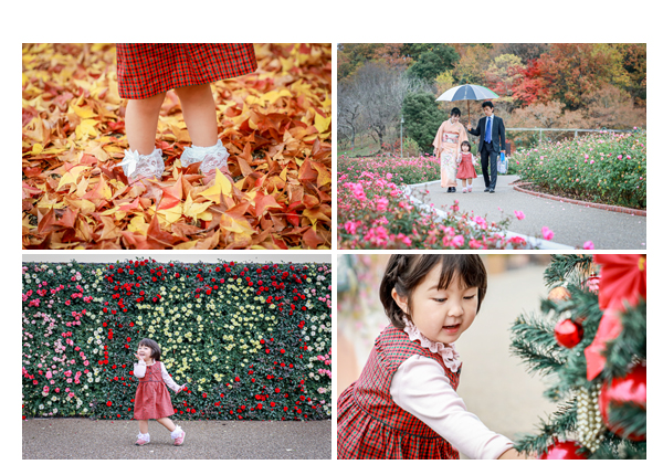 花フェスタ記念公園でファミリーフォト バラの花の壁 落ち葉じゅうたん