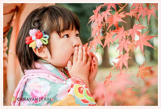 紅葉の季節の七五三 紅葉と3才の女の子