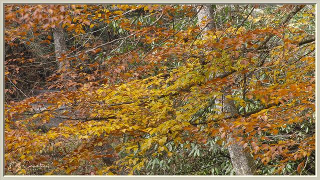 Autumn Leaves (Nature's Paintbrush)