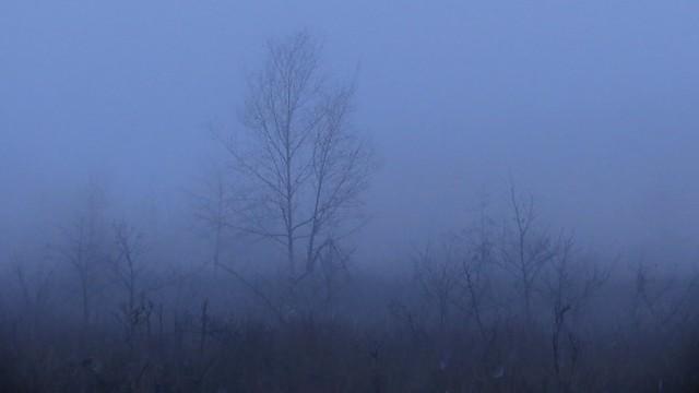 Misty morning walk around Fleet Pond