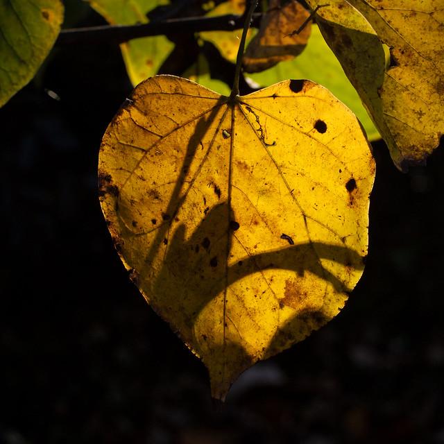 Sunlit autumn