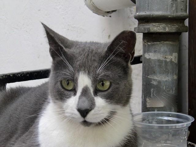 Ο γείτων γάτος 2.   The neighbour tomcat 2.