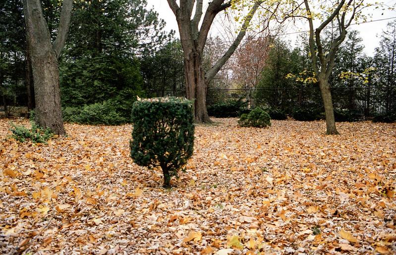 Leaf Covered Backyard