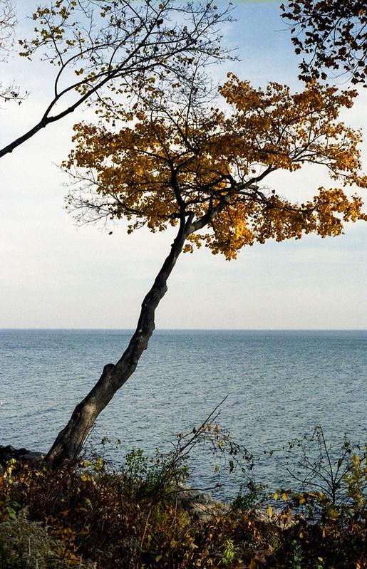 Tree over The Shoreline