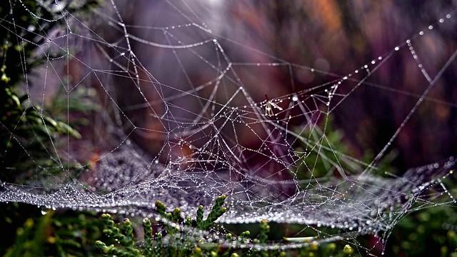 Cobwebs in autumn 1