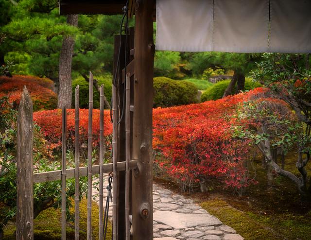 Through the gate.