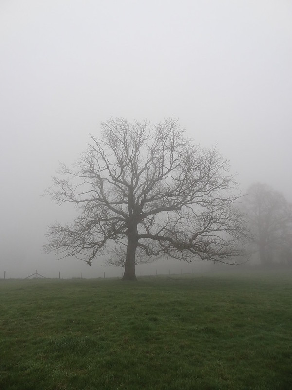 Foggy Friday, Thistly Field