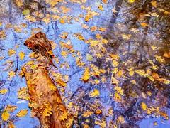 Autumn Notebook 21