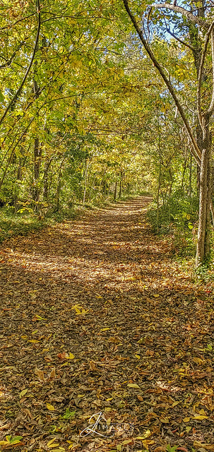 Path at McConnell Springs Park