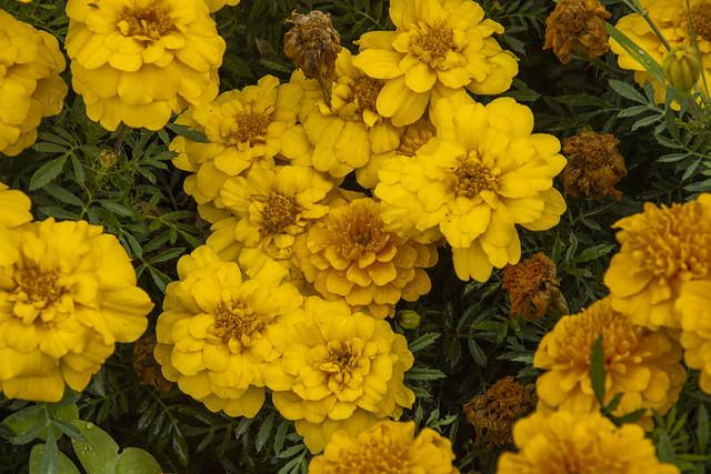 En amarillo