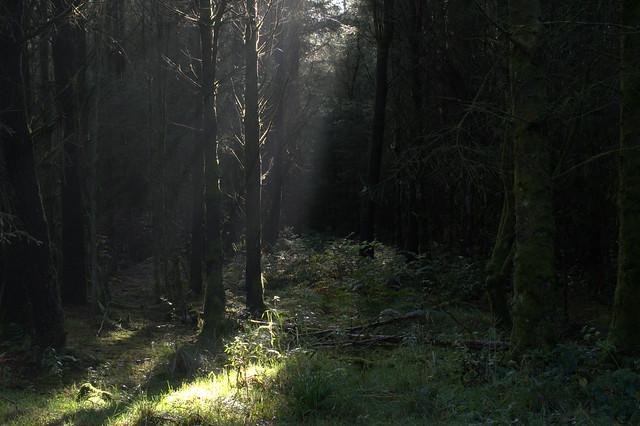 Eskrigg forest