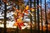 Dry leaves in the deep autumn sun | November 27, 2020 | Tarbek - Schleswig-Holstein - Germany