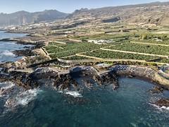 Alcala - Beaches in Tenerife