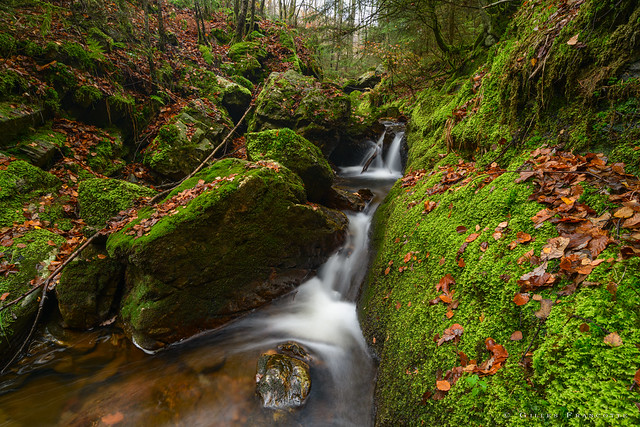 Watercourse in the mossy rocks.