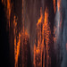 Cloudy stalagmites