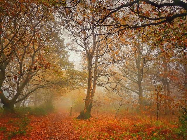 Gentleshaw Common, Burntwood, England