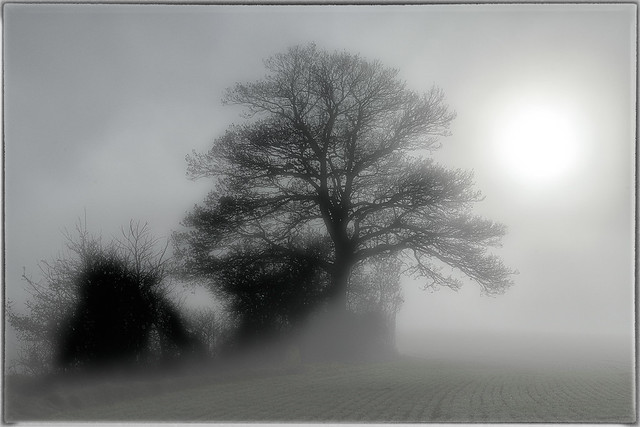 LOST IN THE MIST