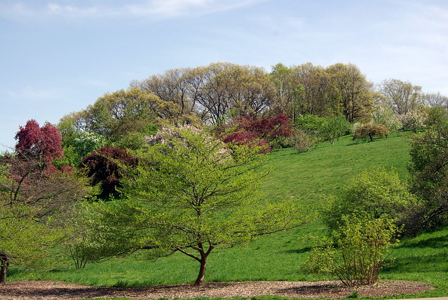 Spring at Peters Hill