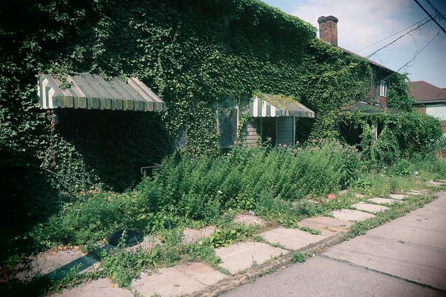 More Greening of America.