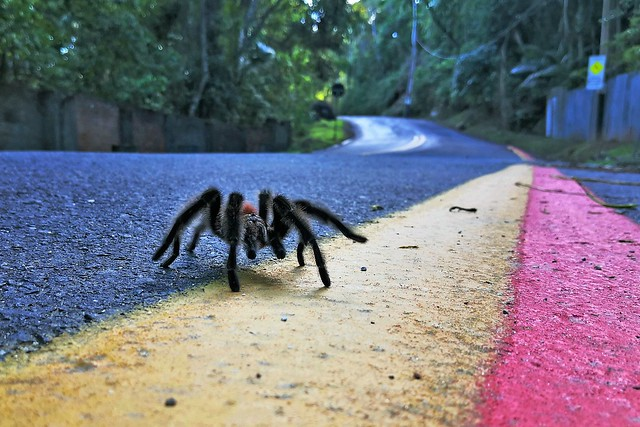 Spider crossing