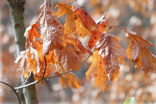 Crinkled Leaves