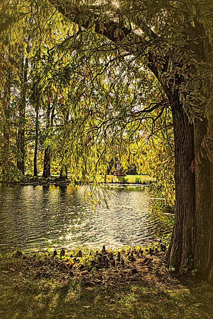 Autumn Cypress IMG_0117