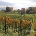 Hagnau, vineyards with view to Lake Constance