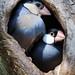 Java Sparrow 27 11 20
