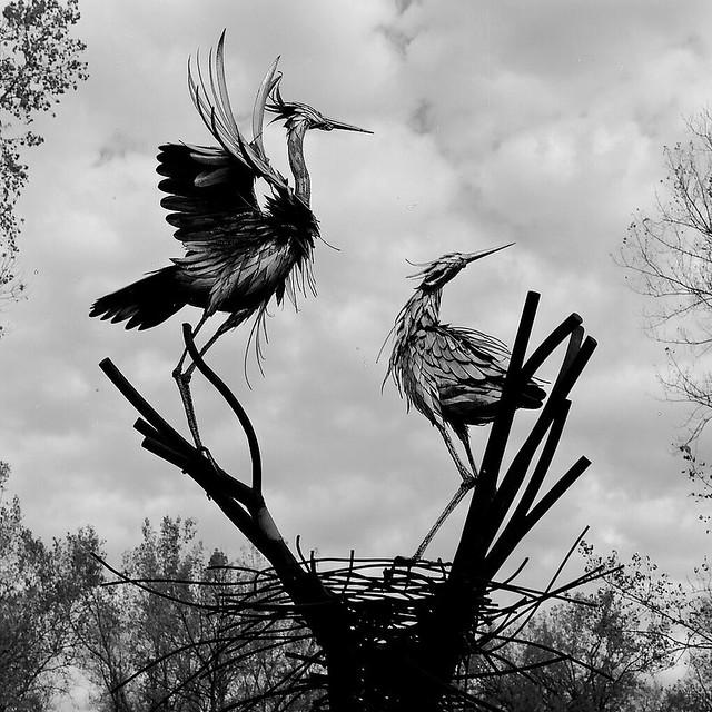 Herons at Montezuma National Wildlife Refuge