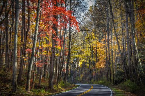Color along Newfound Gap Road