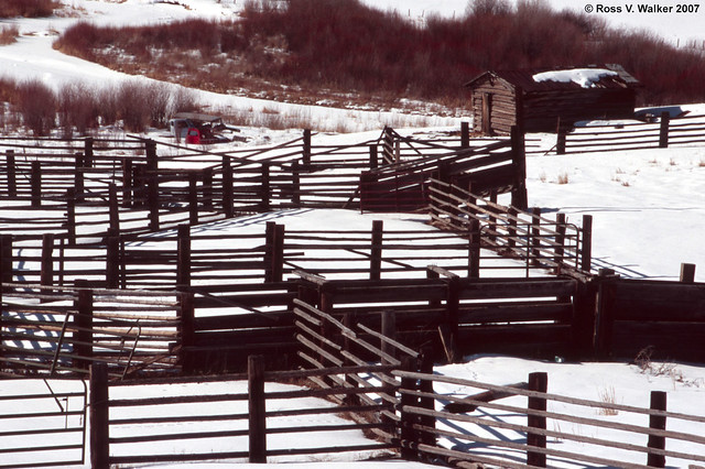 Fence Maze