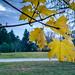 Autumn Ends
