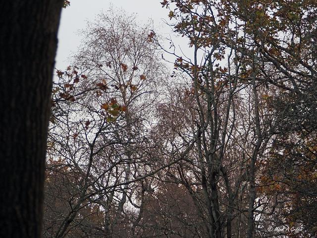 November treetops
