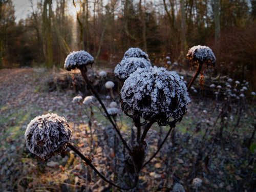 Impressions of early winter | by (Oden) WALD-Fotograf