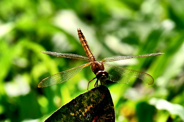 Grasshopper: Nature and Solitude