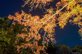 Autumn leaves in the night