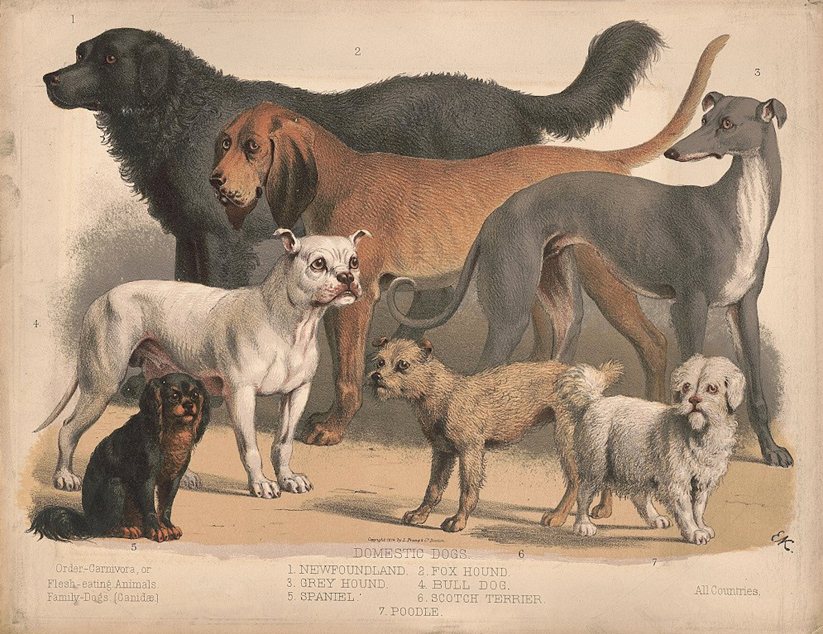 A vintage poster depicting a group of dogs of different breeds