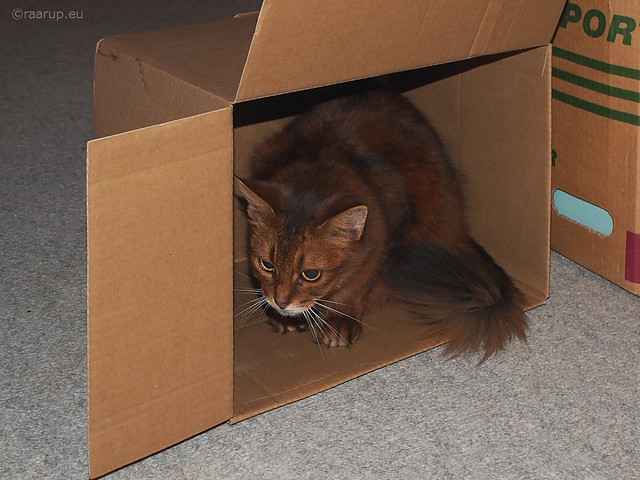 Hiding in her own box - Happy Caturday