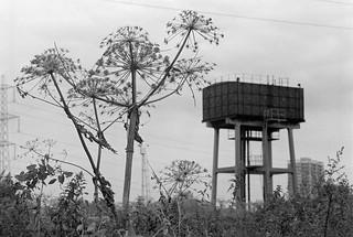 Hackney Marsh, Hackney Wick, Hackney, 1982 32u-13_2400