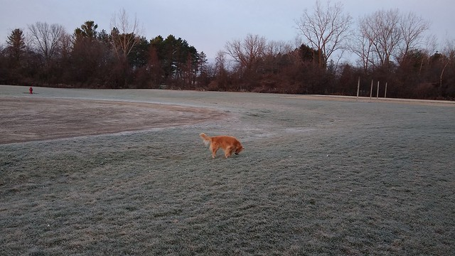 Mya and Frost on grass.    IMG_20201124_074737045