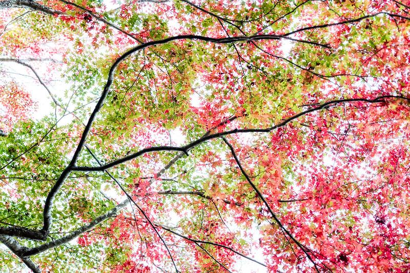 Autumn Color Patches