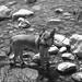 Alcune foto di Chicco nel fiume