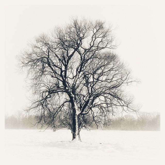 Lone Tree (Winter im Schraden, Brandenburg, Deutschland)